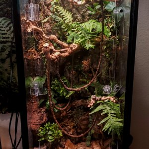2nd vivarium